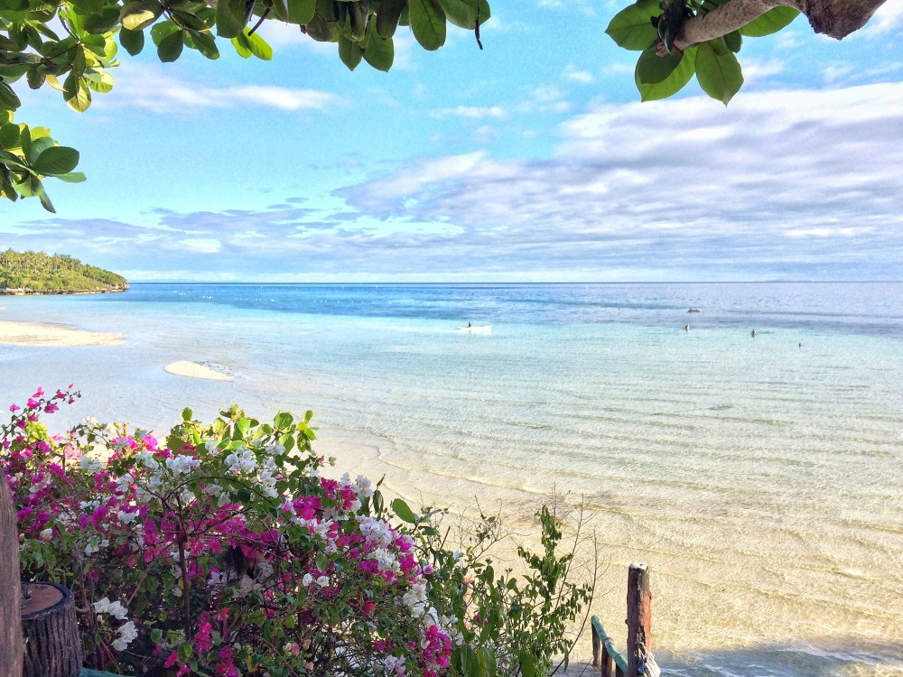 Flowers on Camotes Island http://vaycarious.com/2017/02/1/flowers