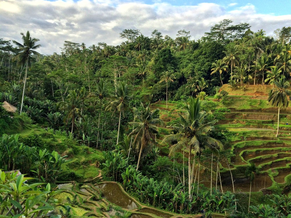Bali, Indonesia vaycarious.com