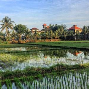 Ubud, Bali vaycarious.com