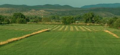VB Farms Hay Fields