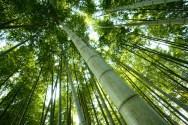 Manuscritos en bambú 8
