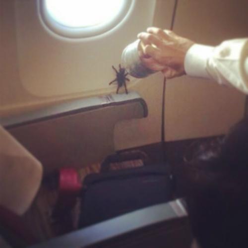 Nhện cũng xuất hiện trên máy bay.