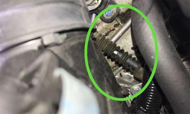 Dấu vết chuột cắn phá trong chiếc Honda Civic. Ảnh: David Albin
