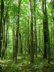 hike in woods