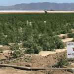 GREEN RUSH | Ventura County issues permits for 4,000 acres of hemp