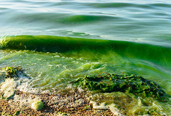 ALGAL OUTBREAKS, TRAGIC DEATHS HIGHLIGHT NEED FOR ACTION