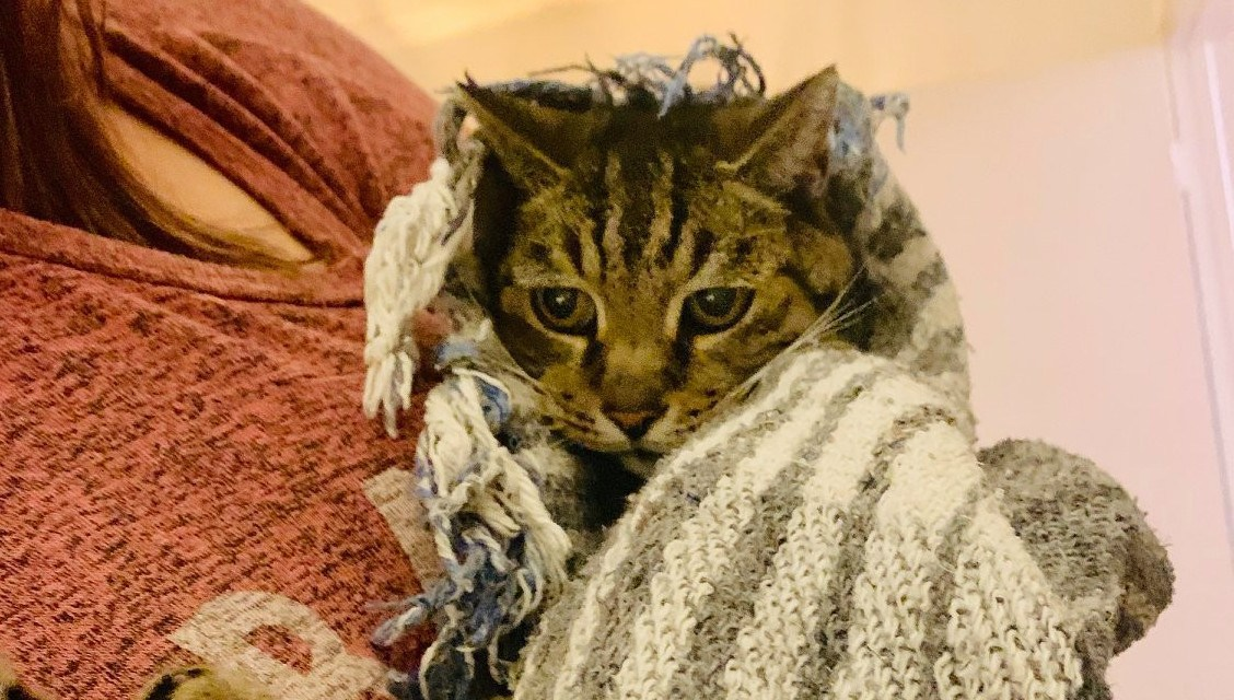 KINDNESS CORNER | Cat missing for seven years reunited with owner