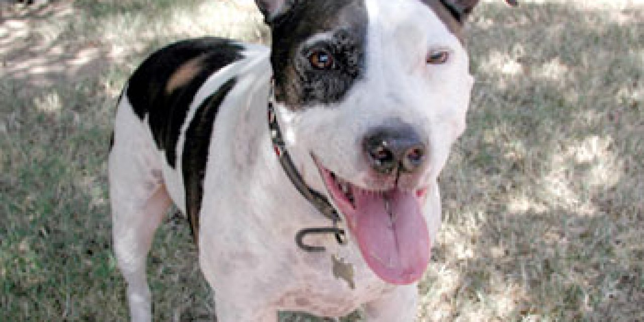 Nature vs. Nurture: Can you ever really trust a pit bull?