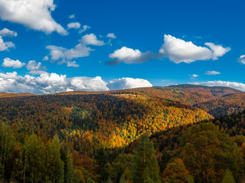 Mountain Golija in Autumn