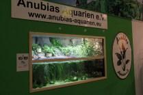 Paludarium am Stand von Anubias Aquarien e.V._resize