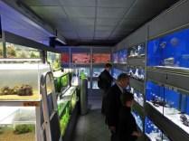 11 Schaubecken und Anlage Das Aquarium