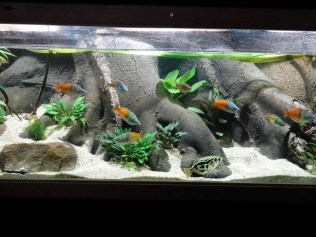 Prächtiges Aquarium am Stand von Anubias