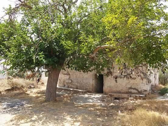 """""""مستوطن """" يحول """"مزار ديني"""" في عفرين إلى مأوى للماشية"""