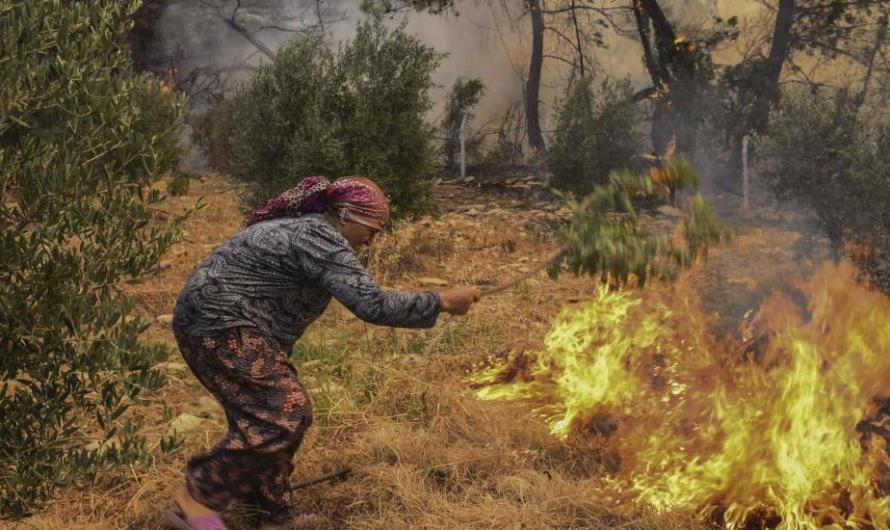 في سبيل عقيدة الربح.. العنف العاري في تركيا يهلك المجتمع ومحيطه الحيوي