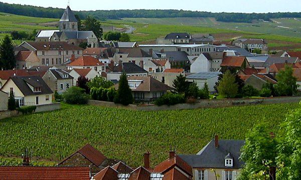 krug-clos-du-mesnil-viñedos