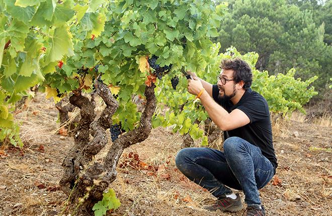 fernando mora master of wine