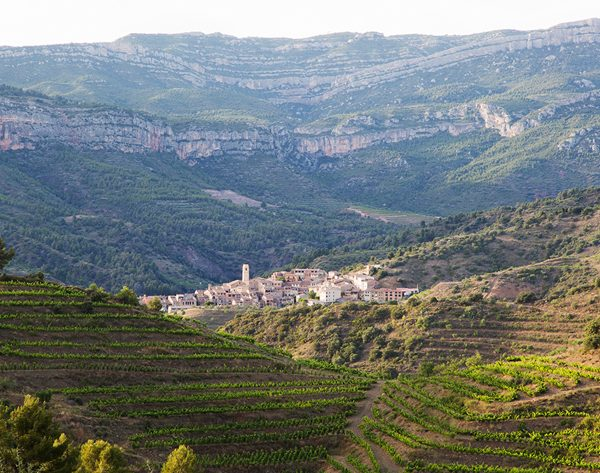 viñedos costers Vinícola del Priorat