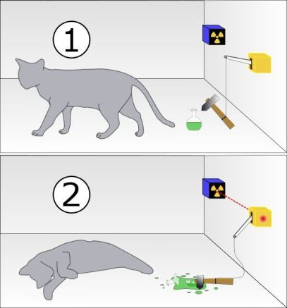 Gato-schrodinger