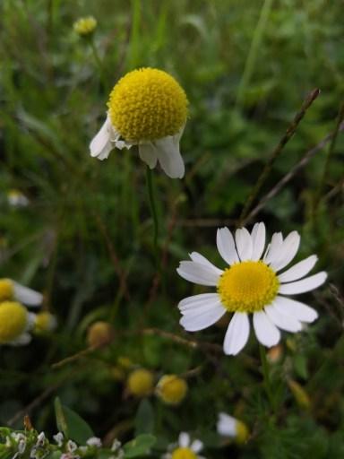Photographie de fleurs de mon jardin