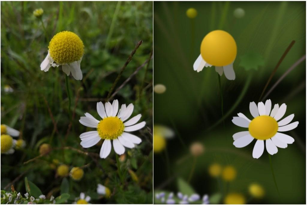 Illustration d'un avant / après vectorisation de fleurs