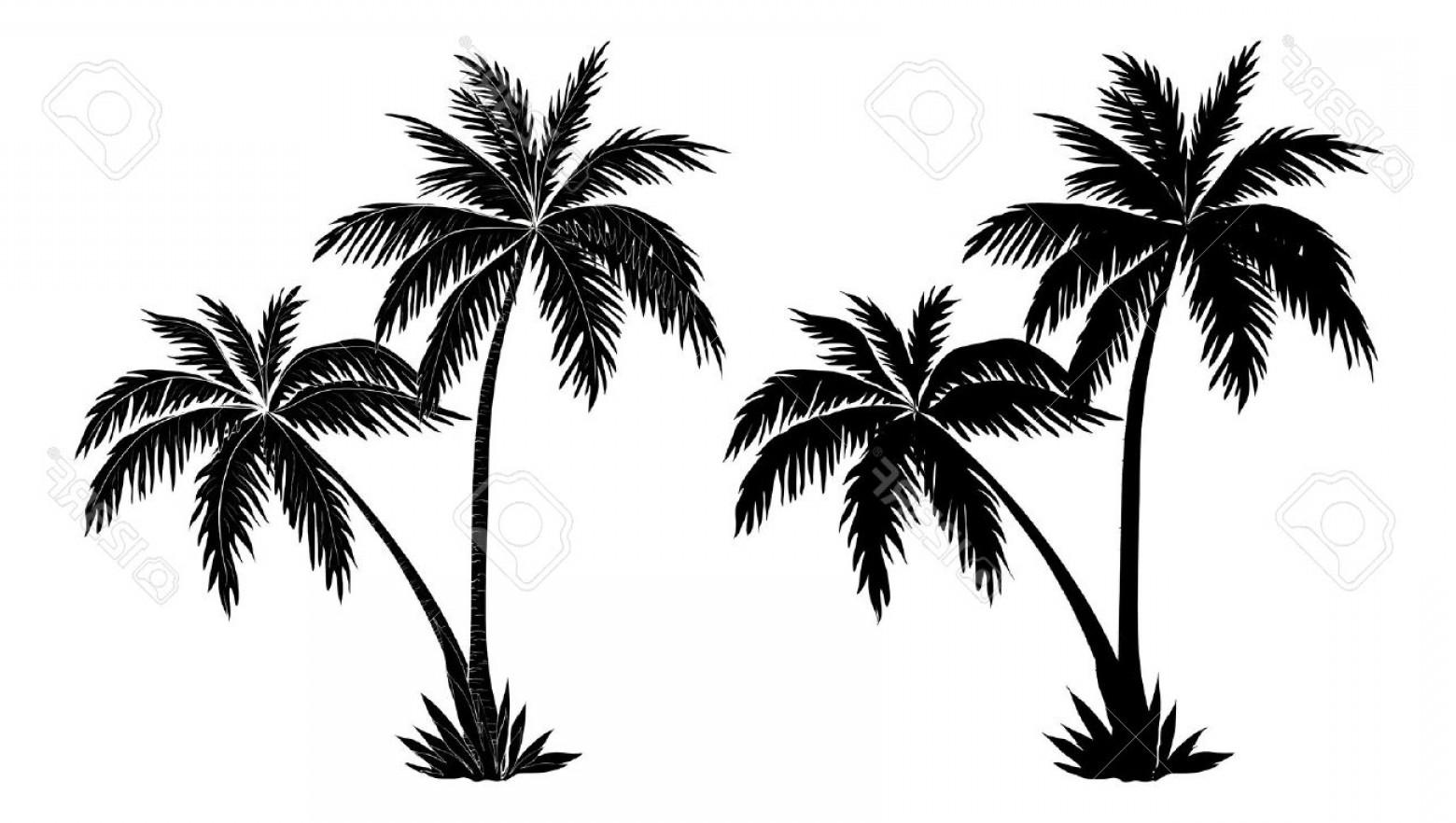 Palm Tree Vector At Vectorified