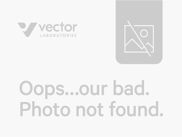 Bovine Serum Albumin (BSA), Biotinylated