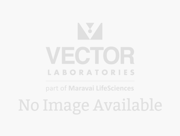 Protein A, S. aureus, Biotinylated