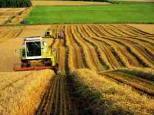 Правительство утвердит субсидии для аграриев