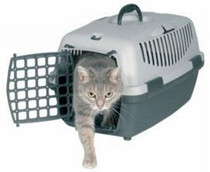 Перевозка кошки за границу