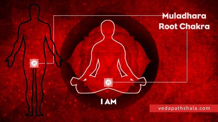 Root Chakra (Muladhara) Location in Human Body