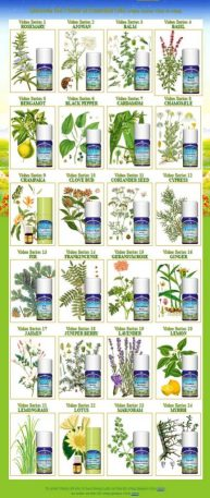View in a glance 24 Essential Oils [A-M]