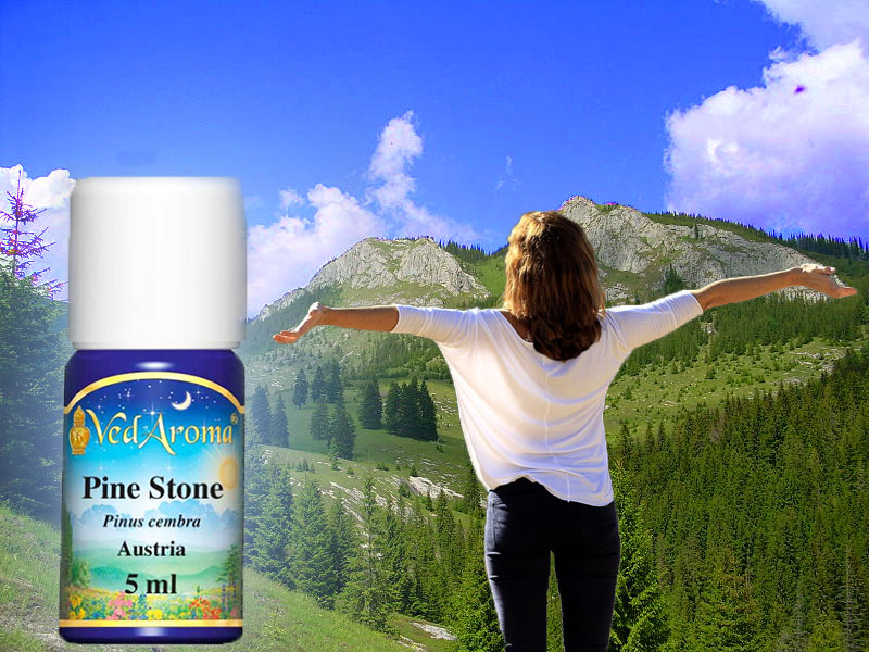 Pine Stone Essential Oil—Discover the Healing Properties and Application in 5 min