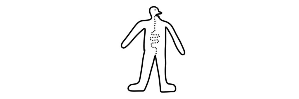 2D človek