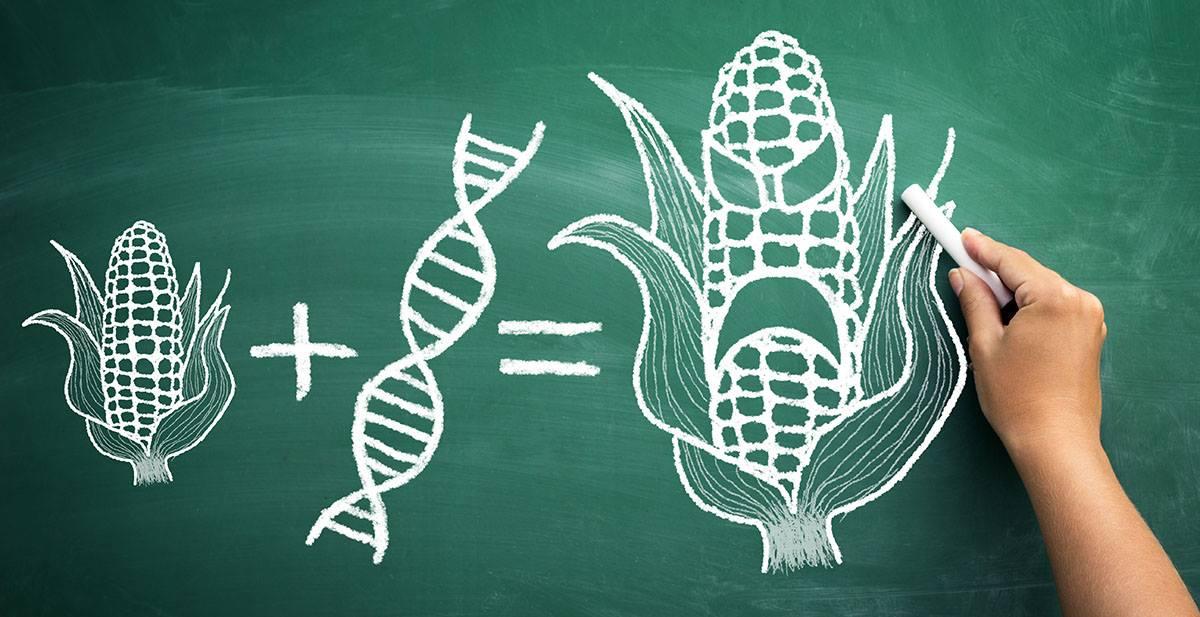 Strach z GMO