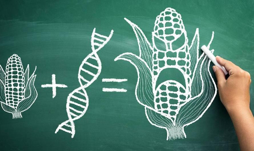 Máme sa báť GMO?