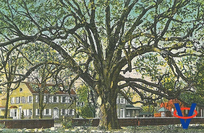 Stromy v meste