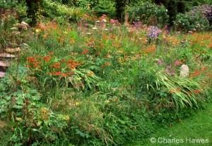 Veddw - South Garden - Wild Garden