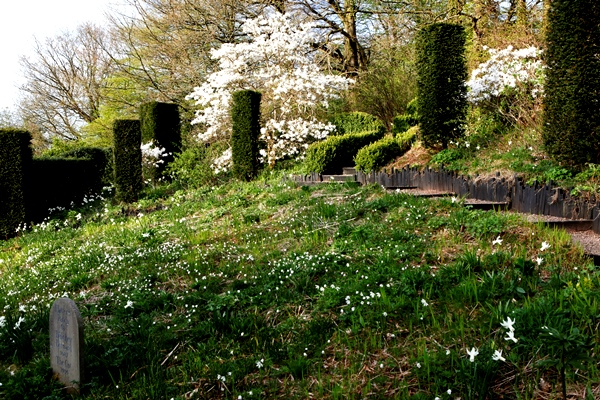 Wild garden in May Veddw, Copyright Charles Hawes_