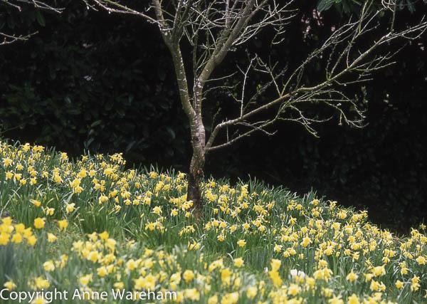 Orchard, Veddw, copyright Anne Wareham