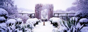 Front Garden in snow, with Box Balls, Veddw, copyright Charles Hawes