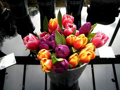 Tulips copyright Anne Wareham