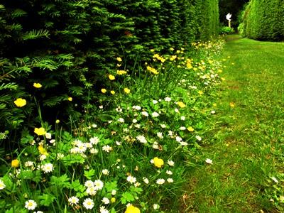 Hedge Strip beside Yew Walk at Veddw copyright Anne Wareham