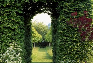 View into the Meadow and avenue of Corylus colurna through the Hornbeam Tunnel. Cotinus on right. Veddw House, Monmouthshire. Copyright Charles Hawes