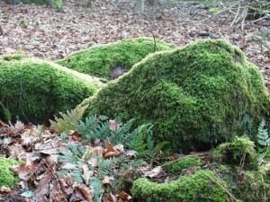 Veddw Copyright Anne Wareham 059 Mossy rocks at Veddw