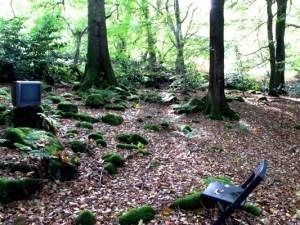 Television in Veddw Wood copyright Anne Wareham