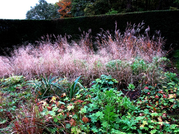 New garden November Veddw Copyright Anne Wareham