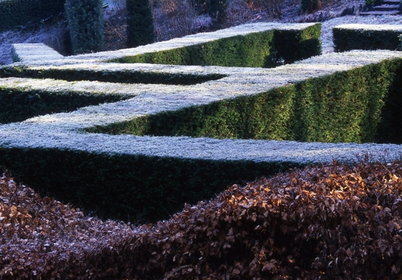 Frost on hedges at Veddw, copyright Charles Hawes