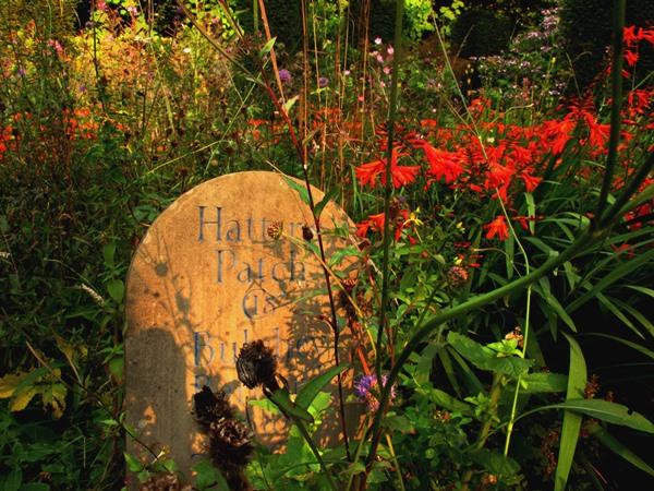 Wild Garden, Veddw copyright Anne Wareham 26.08.13 042 s