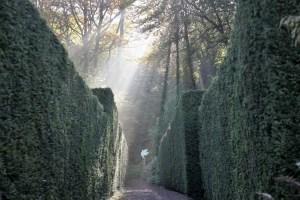 yew-walk-veddw-copyright-anne-wareham