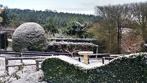 January 2017 Front Garden, Veddw copyright Anne Wareham